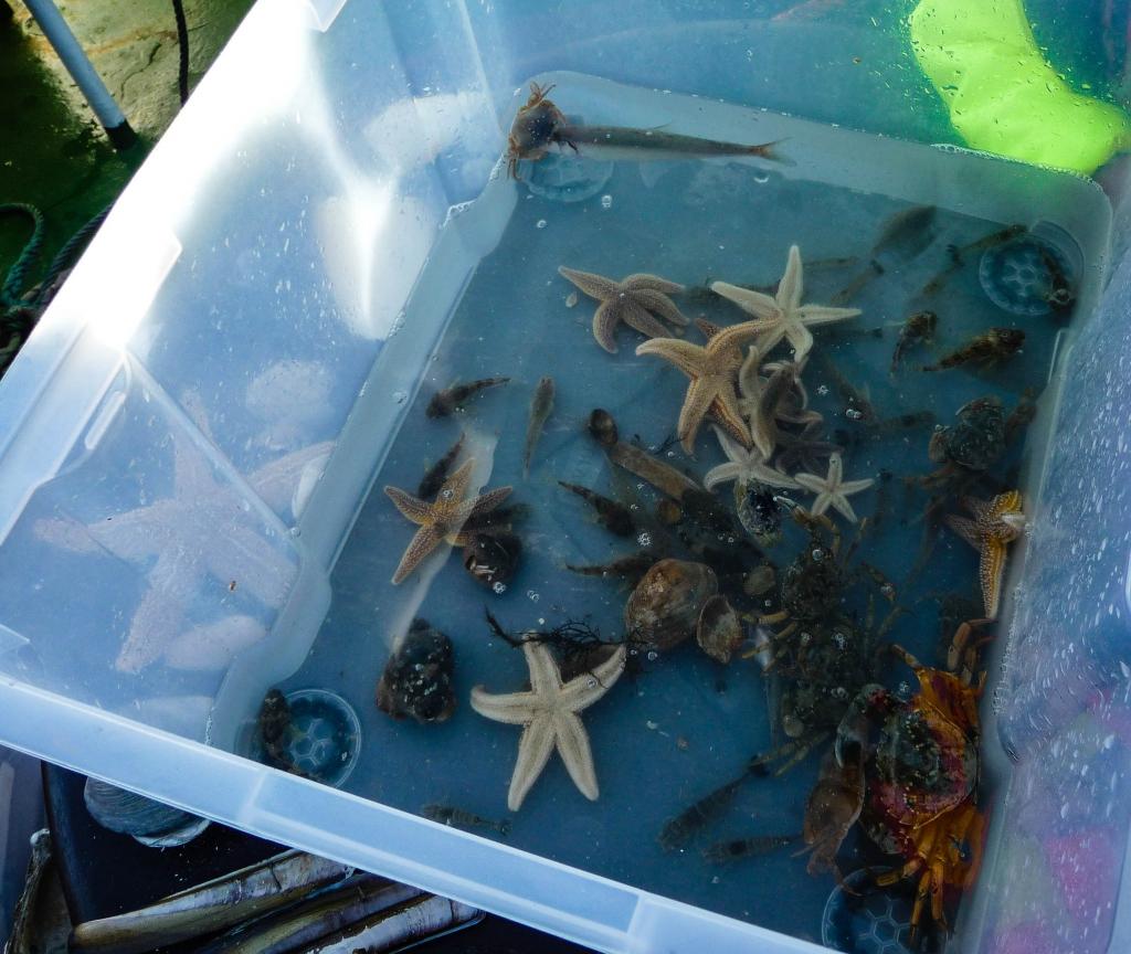 Die gefangenen Meerestierchen in der Box