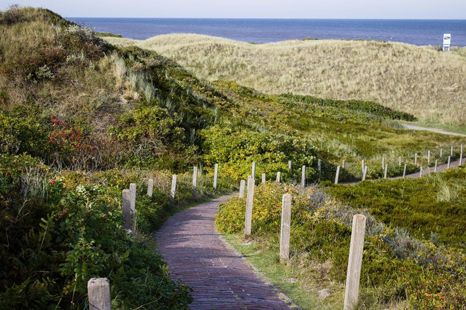 Ein kleiner Pfand führt durch die Dünen an den Strand