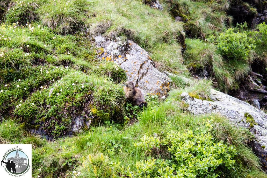 Säumerweg-Zermatt-005