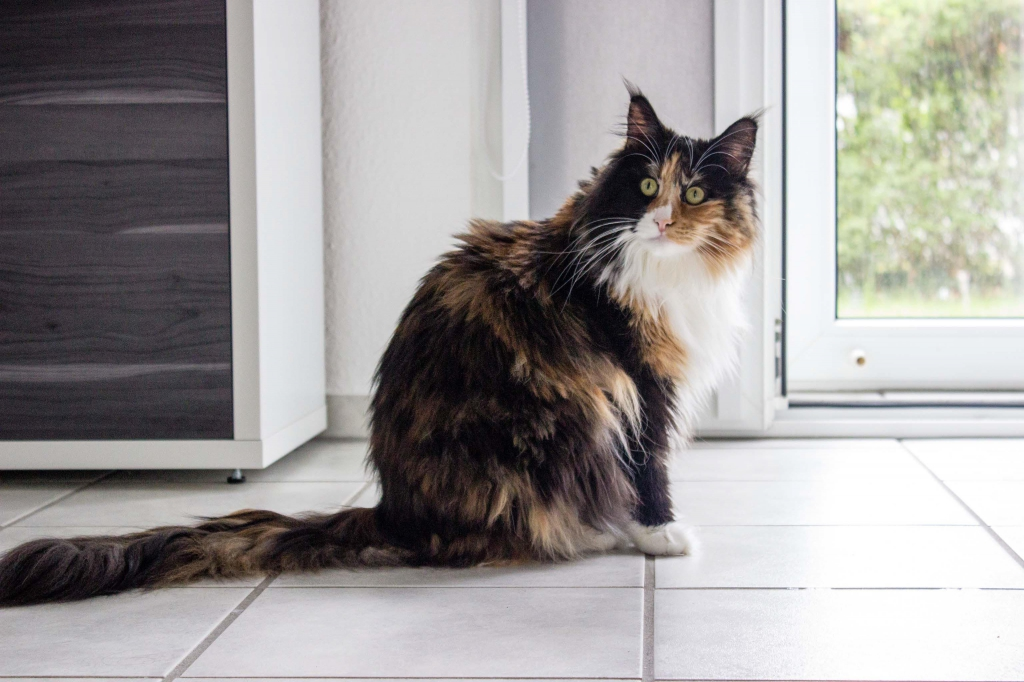 Gil - Die Hauskatze